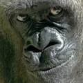 Foto del perfil de Julio