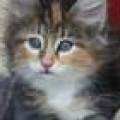 Foto del perfil de Nani