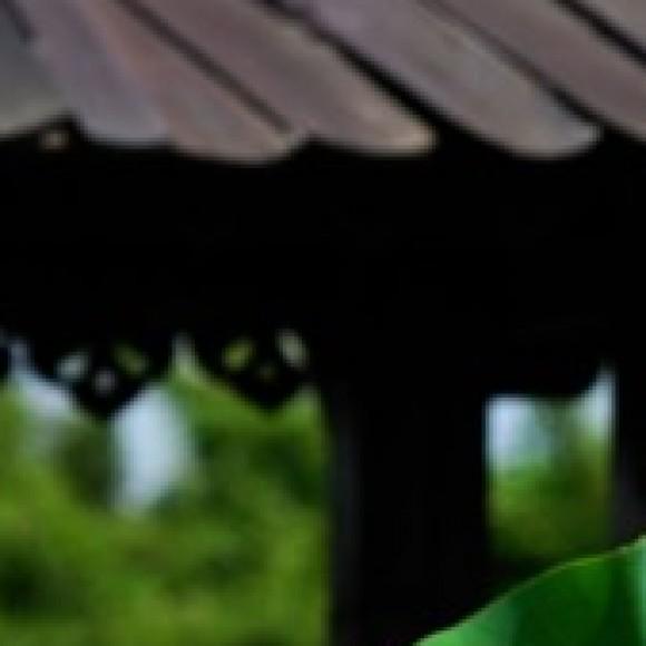 Foto del perfil de Rafael33