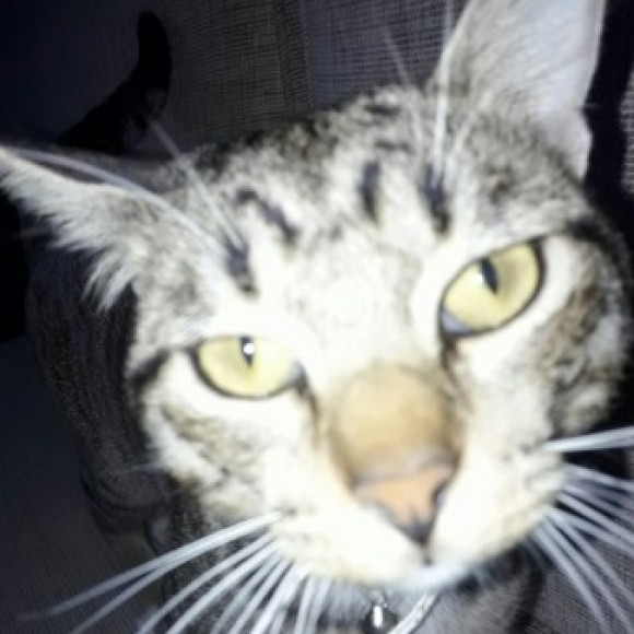 Foto del perfil de Whymper Marc